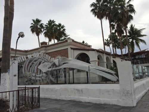 la paz whale museum