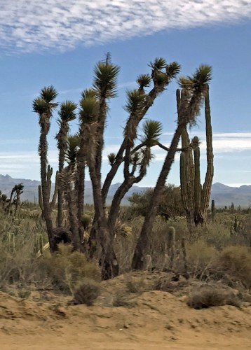 California Desert Landscaping