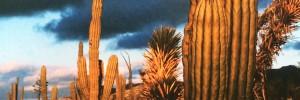 Baja's Hidden Gold cover