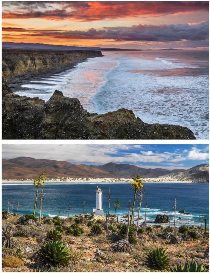 Baja's Wild Side collage