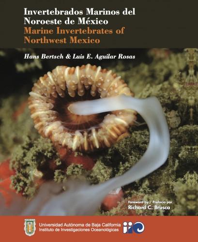 marine invertebrates of northwest mexico