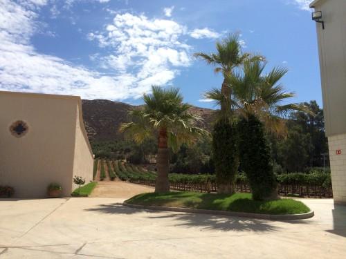 Go Auto Insurance Quote >> valle de guadalupe valley wine tour baja mexico - L.A. Cetto - Discover Baja Travel Club