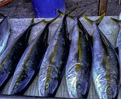 baja_fishing_report