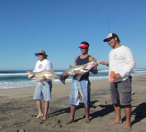 Baja fishing report snook