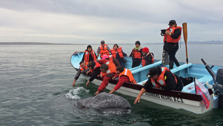 Gray Whale Watching Baja