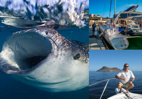 baja expeditions whale shark trips