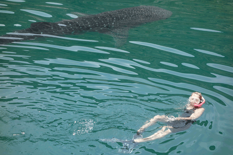 Snorkeling with Baby Whale Shark at El Coyote Bay - Photo by Jonathan Ehly