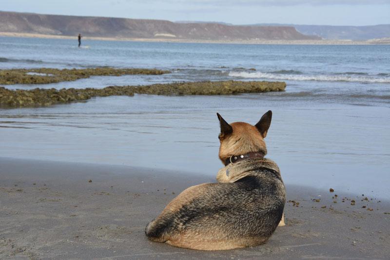 Kai keeping an eye on the surfers in San Juanico