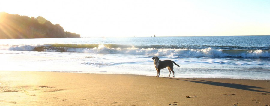 Pet Friendly Hotels in Baja