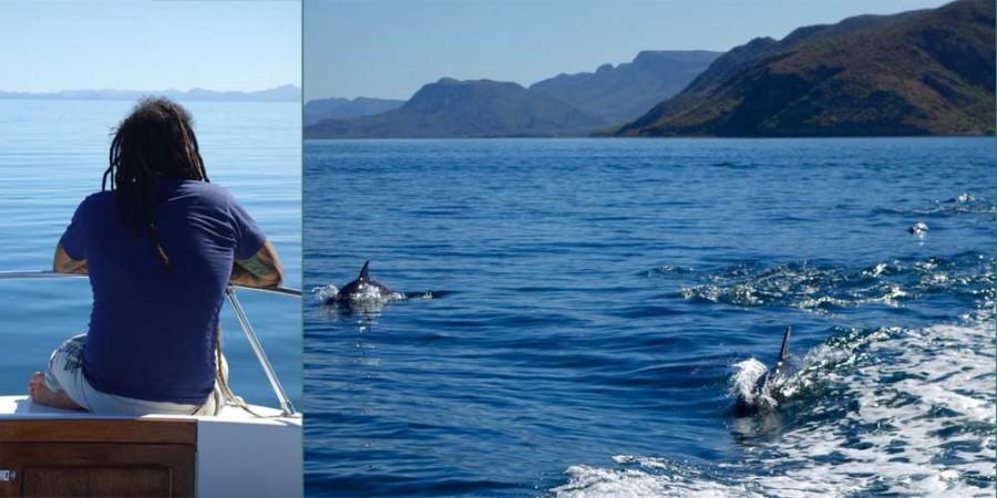 Bahia Concepcion dolphins