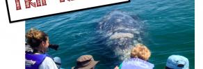 trip report gray whales san ignacio baja