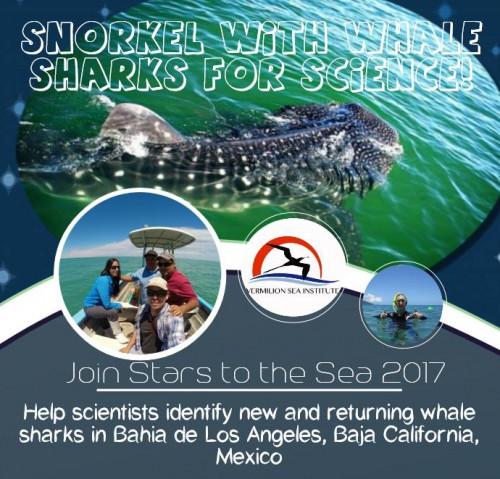 whale sharks LA bay